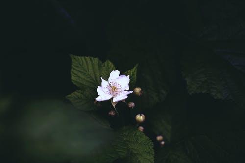 pexels-photo-4091186